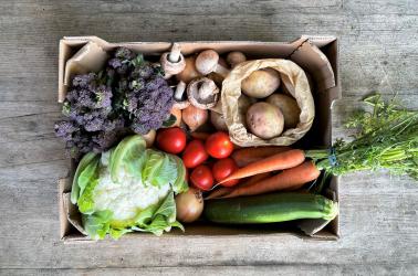 Picture of OriginalPLUS+ Medium Vegetable Box