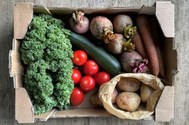 Picture of OriginalPLUS+ Small Vegetable Box